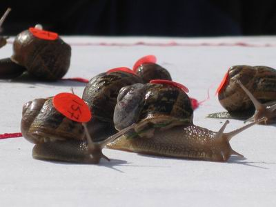 Snail Racing Championships, The Cricket Field, Lynn Road, Congham, Norfolk | Snail Racing Championships - An event that is timed to the last milisecond! | Special, Children, Competition